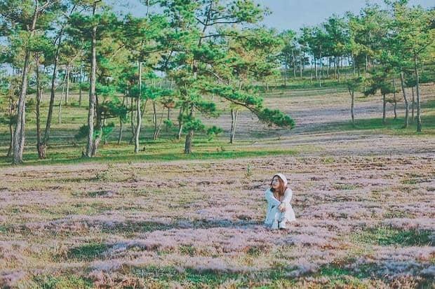 địa điểm du lịch Đồi cỏ hồng Đà Lạt