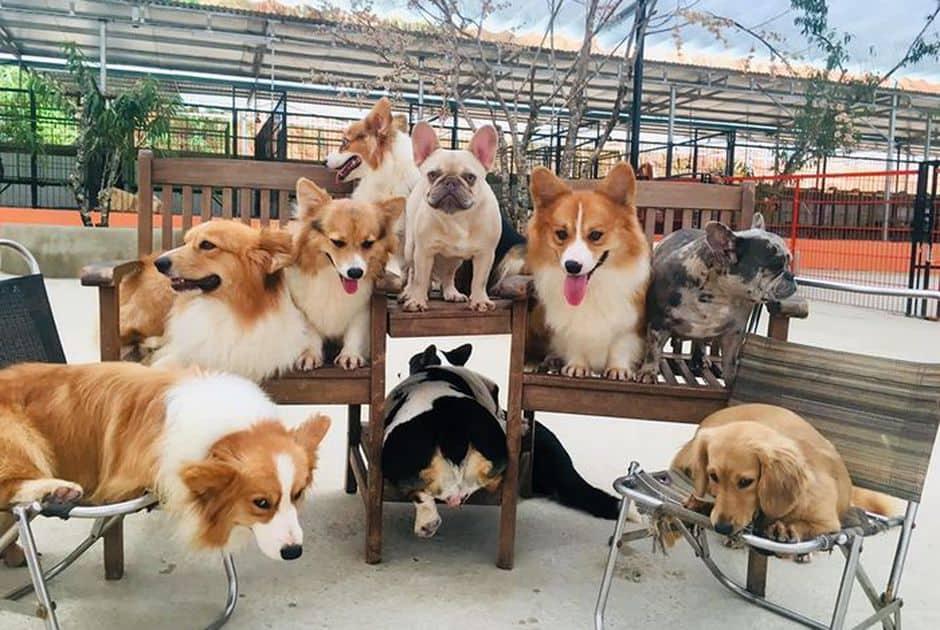 Nông trại cún Puppy Farm Đà Lạt